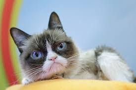 19 Best Grumpy Cat My - grumpy cat is the first real feline to join broadway musical cats