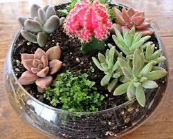 succulent planters dora u0027s daily dish