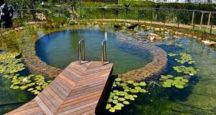 Natural Backyard Pools by 17 Best Images About Pond To Pool Ideas On Pinterest Gardens