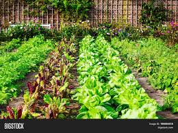 Backyard Kitchen Garden A Formal Backyard Kitchen Garden Assignment Lisathomas Image
