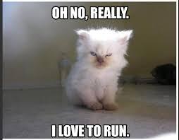 Cat Soon Meme - fitness funny fitness meme angry cat i hate running i love