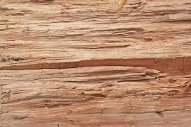 wood log free textures background photo of an wooden log 2 www