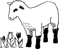 lamb coloring pages kids 17290 bestofcoloring