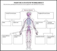 diagrams of the nervous system diagram site