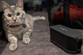 Cat Photo Album The Latest Album To Go Down Will Relax Your Cat My Cat Lady