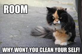 Clean Cat Memes - angry cat memes quickmeme