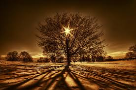 tree of light by lowapproach on deviantart