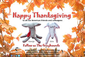 best wishes for a happy thanksgiving greyhound chromatography