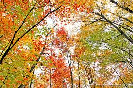 fall color fall colour autumn color autumn colour trees