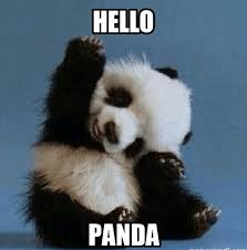Panda Meme - 20 incredibly cute and funny panda memes love brainy quote