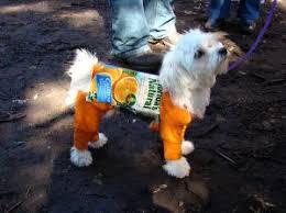 Family Dog Halloween Costumes 133 Dog Halloween Costumes Images Animals Dog