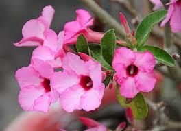 heat loving plants 501 best container plants for full sun images on pinterest best