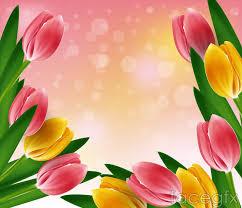 wallpaper bunga tulip tulip backgrounds group 80