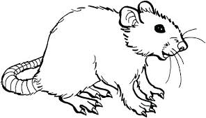 coloring page of a rat rat coloring page rat coloring page rat pictures to color mouse and