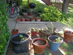 container gardening in lubbock texas local llano