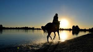 vergleichen zahlt sich aus die so kann die pferdehaftpflicht tarife vergleichen finanz