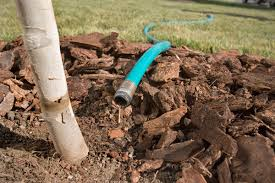 watering sacramento tree foundation