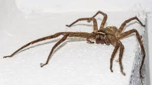 How To Keep Spiders Out Of Your Bed British Homes Are Being Invaded By Giant Spiders U2013 Here U0027s How To