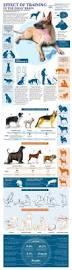 boxer dog training tips best 25 boxer training ideas on pinterest boxing boxing