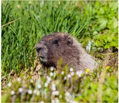 4 surprising facts groundhog tgif grandma fun