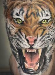 tiger picmia