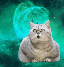 Omg Cat Meme - funny cat meme gifs search find make share gfycat gifs