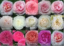roses wholesale mayesh flirty fleurs the florist inspiration for floral