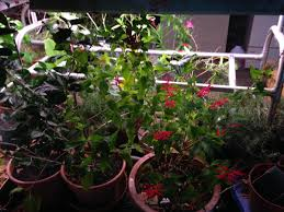 gardening the charmed kitchen