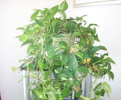 genial easiest house plants that die on you house plants to plush
