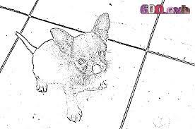 Chihuahua ausmalbilder  600ovh
