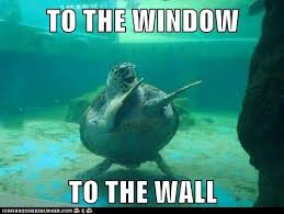 Funny Turtle Memes - 63 best omg funny turtles there will be s lot images on pinterest