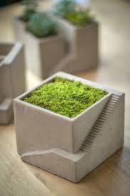 escher style planter succulents cement planters and cement