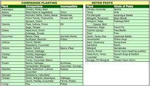 harmony organics seedlings