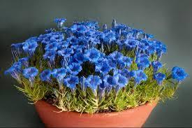 imagenes de jardines pequeños con flores plantas para jardines pequeños y sus ventajas