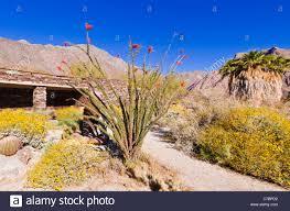 anza borrego desert desert garden at the visitor center anza borrego desert state