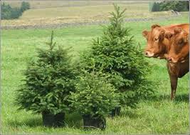 Christmas Tree Buy Online - christmas tree why buy xmas tree online