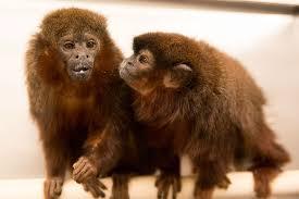 california national primate research center u2013 advancing science