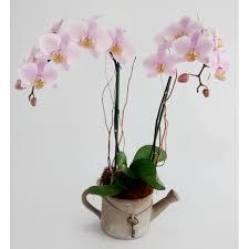 imagenes de feliz sabado vintage orquidea en base de ceramica vintage floral 028