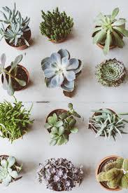 so many cuties indoor garden pinterest mini cactus cacti
