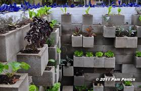 edible wall cinderblock wall vegetable garden wows at big red sun