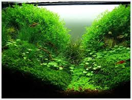 Aquascape Design Aquascape Design Aquascaping Planted Aquariums Of Aqua Amano