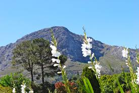 native plants of africa the beauty of the western cape of south africa the garden lady