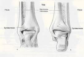 Foot Ligament Anatomy Navigating The Nfl Injury Report Foot And Ankle Injuries U2013 Second