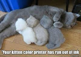 Memes Cat - more cat memes modern cat