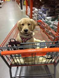 Home Depot Labor Day Paint Sale by Til Home Depot Is Puppy Friendly Aww