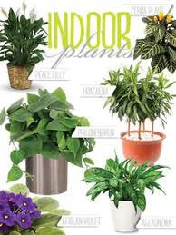 the essential guide to growing beautiful houseplants plant care