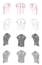 Male Body Anatomy Organs 55 Best Body Man Anatomy Images On Pinterest Anatomy Reference
