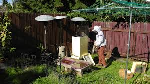 in the moment beekeeping in eugene eugene u0027s honey bee hivemind