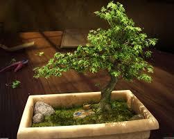 bonsai starter kits