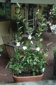 buy trellises u0026 plant supports kinsman garden